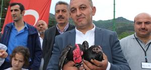 Tokat'ta süs tavuğu severler bir araya geldi
