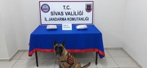 Sivas'ta 3 kilo esrar ele geçirildi