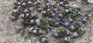 Edremit'te çiçek fideleri dikimi