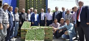 Büyükşehir Belediyesi, Çamlıyayla çiftçisine 260 bin domates fidesi dağıttı