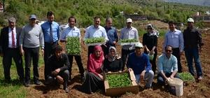 Bitlis'te tıbbi ve aromatik bitkiler toprakla buluştu
