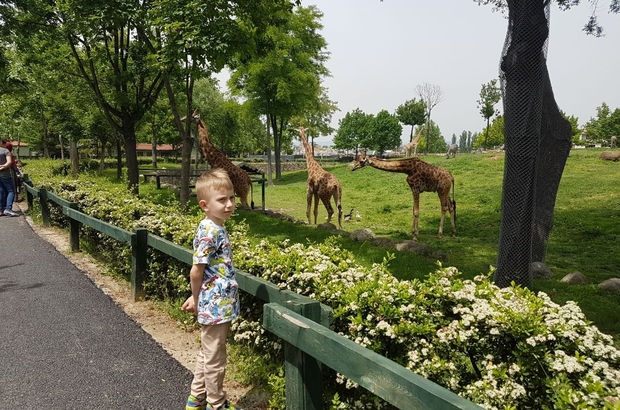 Miniklerin zürafa heyecanı