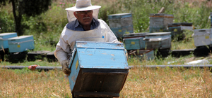 Adana'da 41 arı kovanı çalındı