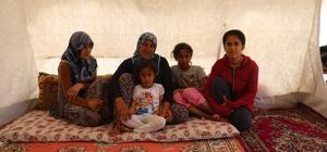 Depremzede anne Anneler Günü'nü çadırda kutladı