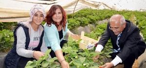 Başkan Çerçioğlu kadın işçilerle çilek topladı