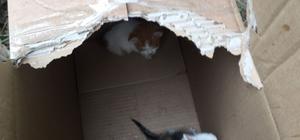 Ormanlık alanda ölüme terk edilen 60 yavru kediyi Eyüp Belediyesi ekipleri kurtardı