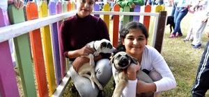 Muratpaşa Belediyesi'nden Sokak Hayvanları Festivali