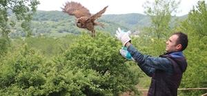 Sağlık Merkezinde mahsur kalan baykuş kurtarıldı