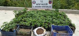 Hatay'da kaçakçılık ve uyuşturucu operasyonları