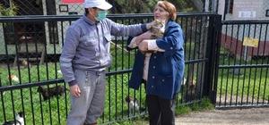 Osmangazi'de sokak hayvanları sahipsiz kalmıyor