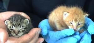 Yavru kedilere polis şefkati