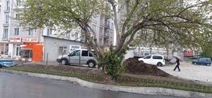 İpekyolu Belediyesi, asırlık  dut ağacı için yolun yönünü değiştirdi