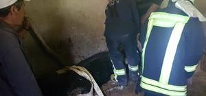 Yalağa sıkışan inek ahır duvarı yıkılarak kurtarıldı