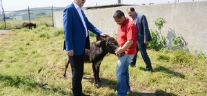Karacabey Belediyesi hayvan dostu