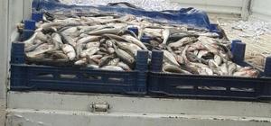 Zabıta ekiplerinden kaçak balık operasyonu
