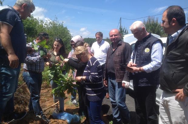 Şile'de Gal arılarına karşı mücadele