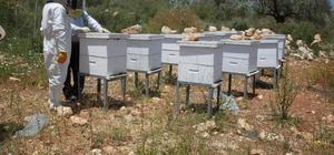 TİKA'dan Filistin'de ailelere arı kovanı ve teknik donanım desteği