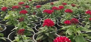Akdeniz, 120 bin çiçekle renklenecek