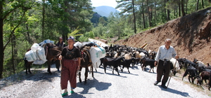 Antalya'da Yörüklerin yayla yolculuğu başladı