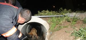 Rögarda mahsur kalan yaralı köpeği itfaiye ekibi kurtardı