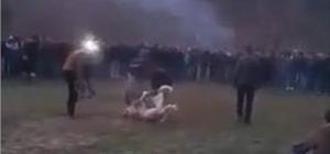 Van'da köpek dövüştürenlere büyük ceza