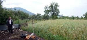 Komşunun bahçesine giren tavuklara 250 lira ceza