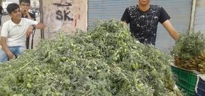 Silopi'de yeşil nohut satışları başladı