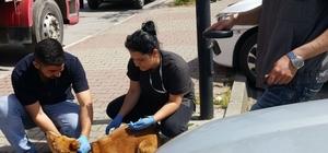 Kartal'da sokak hayvanları kuduza karşı aşılandı