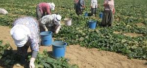 Çorum'daki mevsimlik işçilerin yaşam standartları yükseltilecek