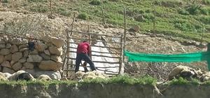 Kurtların saldırısında 70 koyun telef oldu