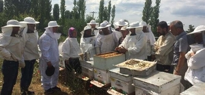 Bayramiç'te 'Uygulamalı Ana Arı Yetiştiriciliği' kursu düzenlendi
