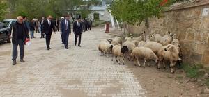 Köse'de süt koyuncularına ORKÖY desteği