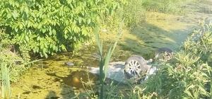 Sakarya'da trafik kazası: 1 ölü, 1 yaralı