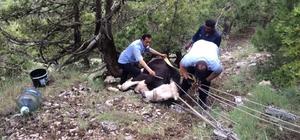 Yuvarlandığı eğimli arazide mahsur kalan inek kurtarıldı