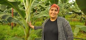 Aydınlı 211 genç çiftçinin projesi kabul edildi