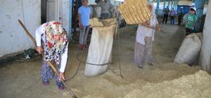Muşlu kadınlar devlet desteğiyle çiftlik kurdu