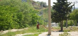 Dinar'da yabani ot temizlik çalışmaları devam ediyor