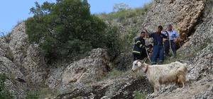 Mahsur kalan keçi yavrusu gösterilerek kurtarıldı