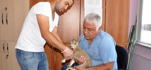 Yaralı yavru dağ keçisine şefkat eli