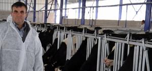Üretici düşük süt fiyatlarından dolayı ineklerini kestirmeye başladı