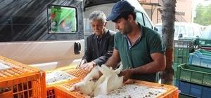 Ziraat Odası 800 etlik ve damızlık kümes hayvanı dağıttı
