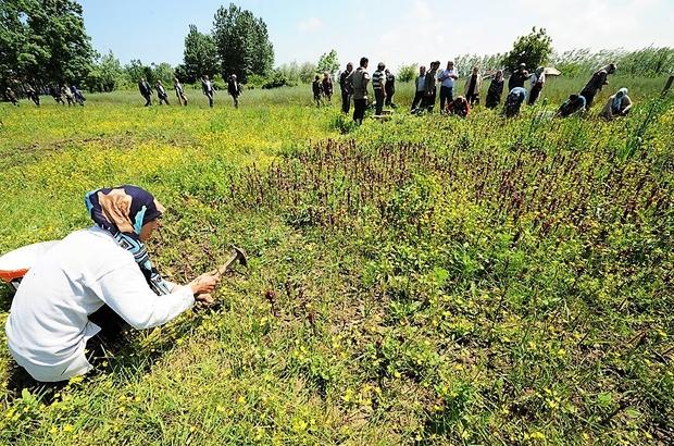 Samsun'da iyi tarım uygulamaları ile ilgili görsel sonucu