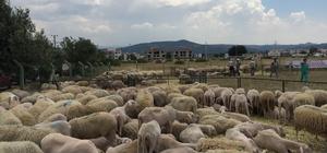 İzmir'de sürü bereketi
