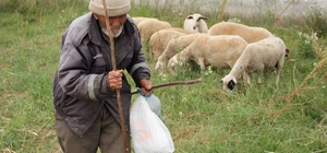 87 yaşındaki yaşlı adam çobanlığı keyifle yapıyor