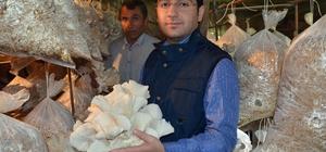 Kaymakam Özerden, mantar üretim tesisini ziyaret etti