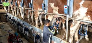 Avusturya heyeti, Kars'taki süt üretme tesislerini inceledi