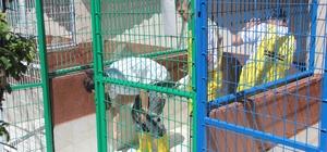 Beyoğlu hayvan barınağında gönüllü temizlik