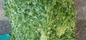 Memleket kokan organik tarım ürünleri tezgahlarda