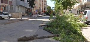 Belediye başkanı, ağaç kesen ekibine ağaç dikme cezası verecek