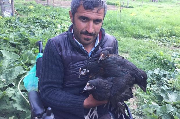 Hediye edilen akülü tekerlekli sandalye ve tavuklarla hayata yeniden tutundu